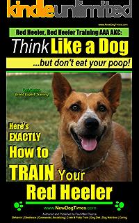 Red Heeler Dog  Red Heeler dog book for costs, care, feeding