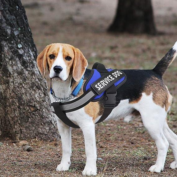 Bolux Arnés para Perro Service, fácil de Poner y Quitar, arnés ...