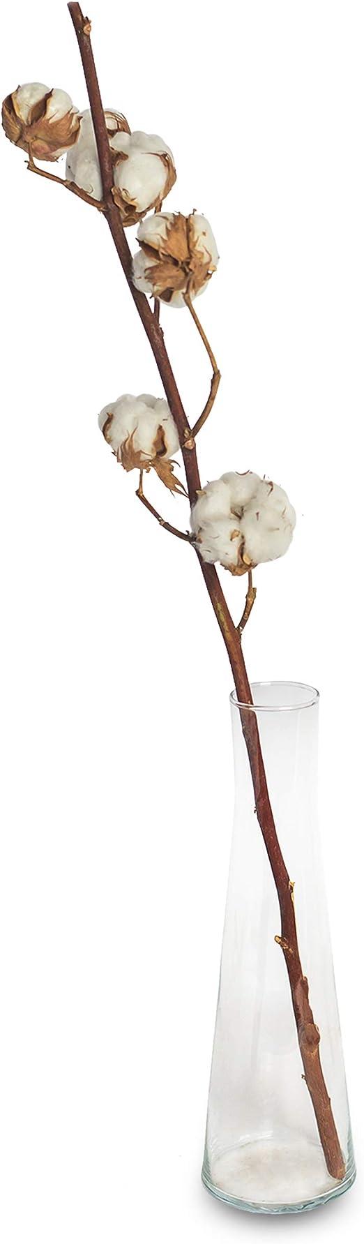 1 x rama de algodón natural, secada, con 8 a 10 flores, más o menos 70-75 cm de longitud, larga vida útil, para decoración, actividades manuales o regalo: Amazon.es: Jardín