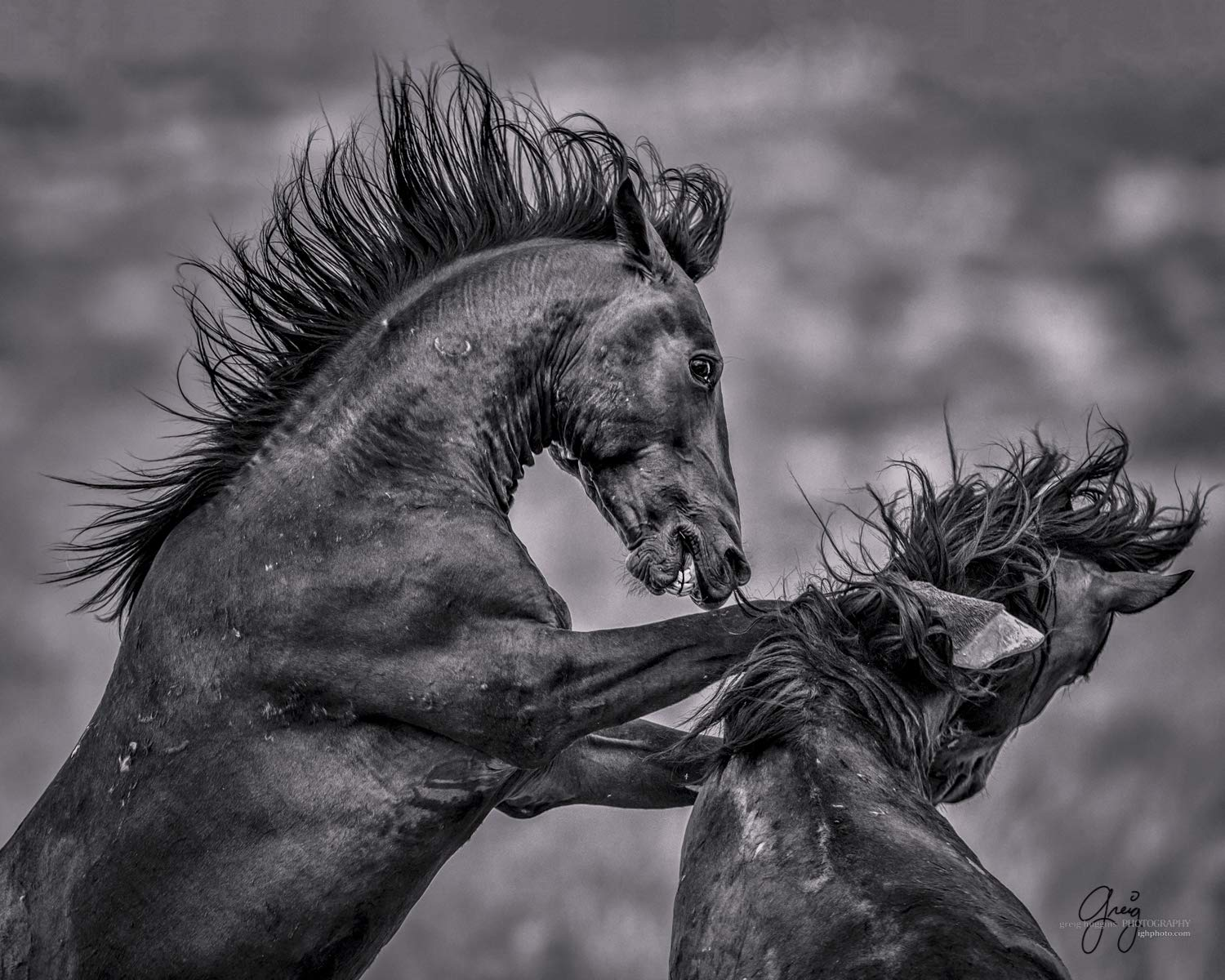 Amazon com wild horse stallions in fight black and white photo paper handmade