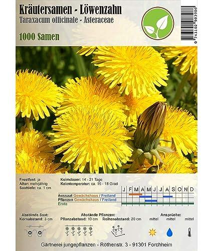 Semillas de hierbas - Diente de león / Taraxacum officinale - Asteraceae 1000 semillas