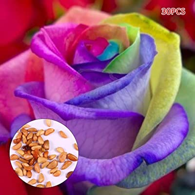 QiBest Colorful Rainbow Rose Seeds Indoor Petal Plants Exotic Flower Garden Decor Flowers : Garden & Outdoor