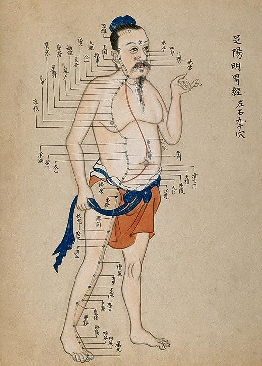 Vintage anatomía tabla de acupuntura, CHINA 250 gsm brillante Art ...