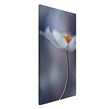 Bilderwelten Pizarra magnética - White Anemones Bloom ...