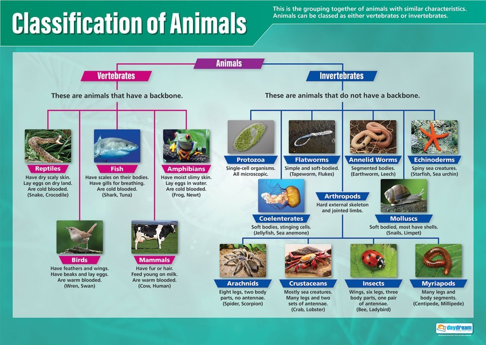 """Classification of Animals 