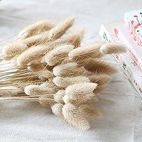 Beau Jour Natural Dried Lagurus ovatus 100 Pcs, Dried Pampas Grass Flower Arrangements Wedding Home Decor
