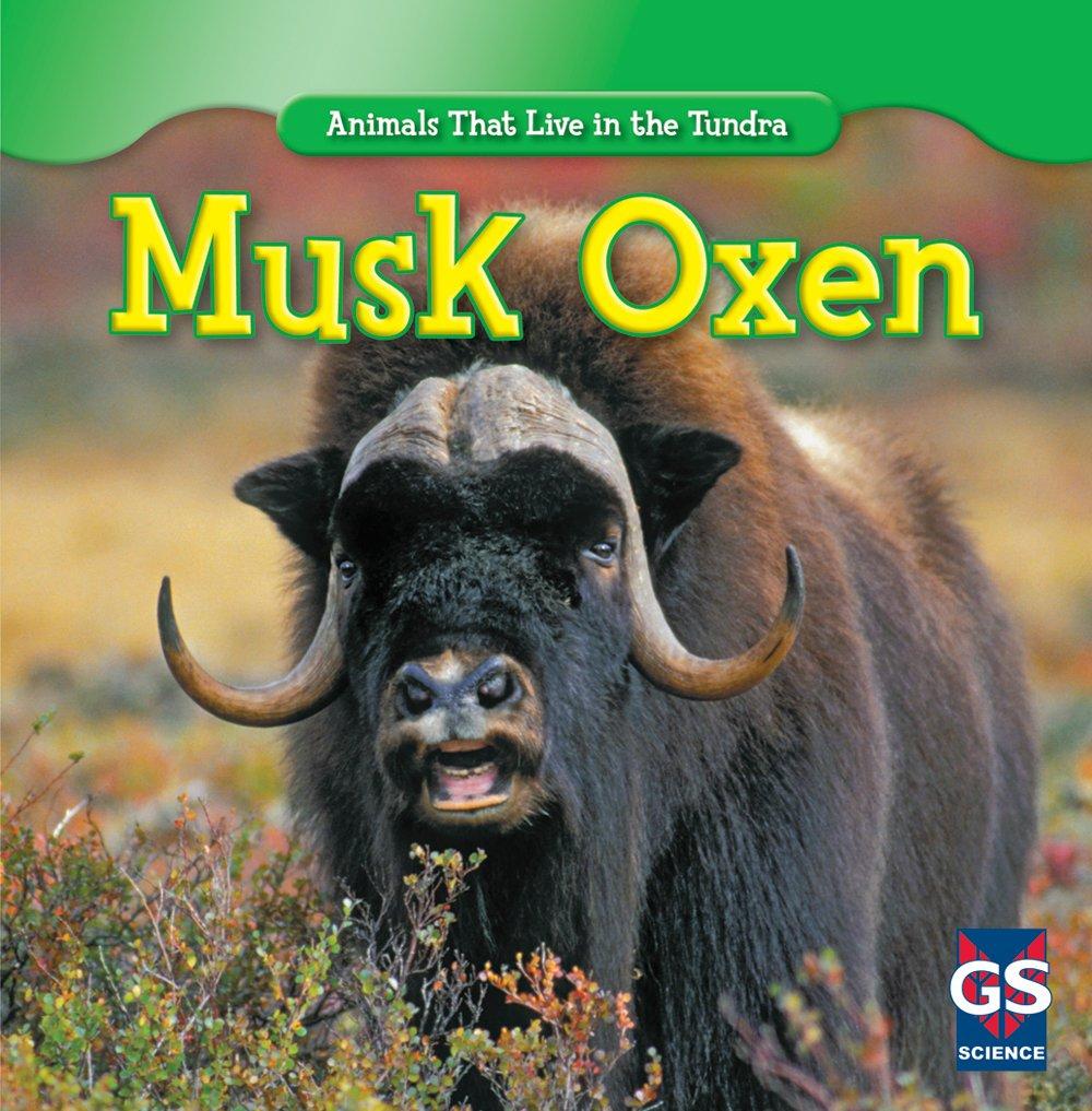 Musk Oxen (Animals That Live in the Tundra): Roman Patrick: 9781433939037: Amazon.com: Books