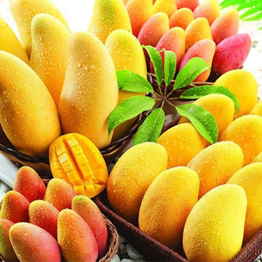 Mini Mango Árbol Semillas Raras Frutas Plantas Bonsai Home Garden Decor - 2pcs