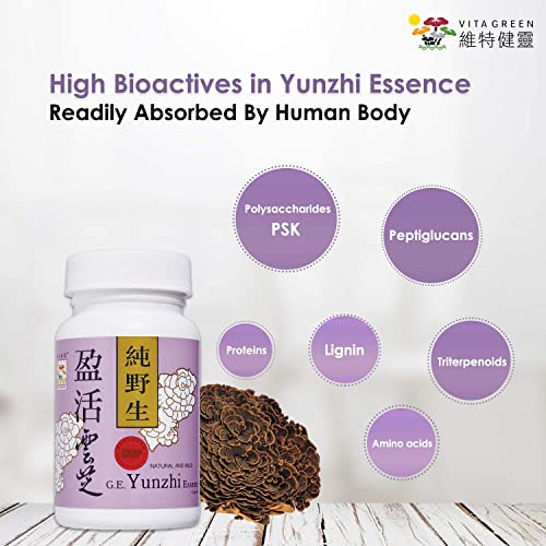 Turkey Tail Mushroom Fungus Yunzhi Essence, Wild Natural Immune Defense Energy Booster, Liver Cellular Health Support, High Antioxidant Recovery and Digestive Balance – 60 Capsules