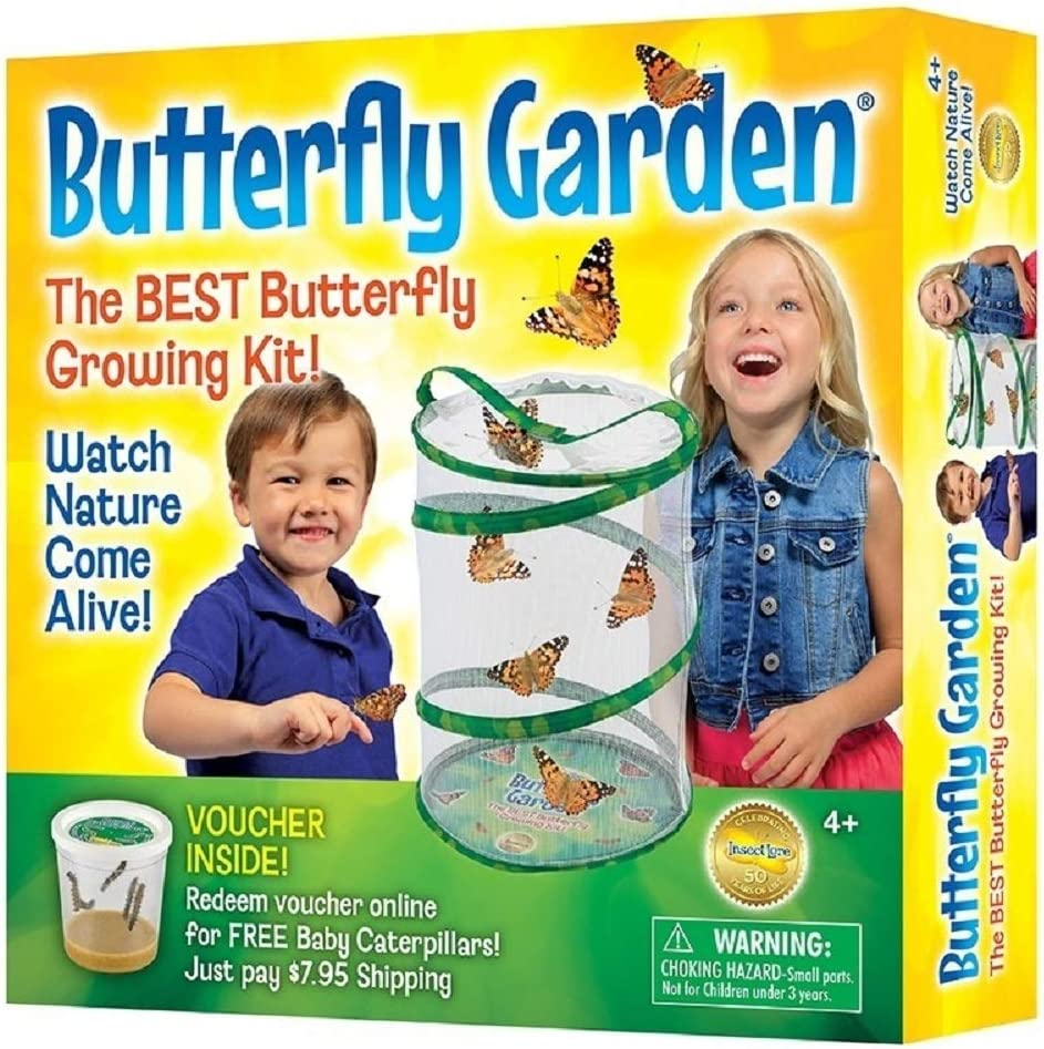 B00000ISC5 Insect Lore Butterfly Growing Kit - With Voucher to Redeem Caterpillars Later 71OHXdGg0DL