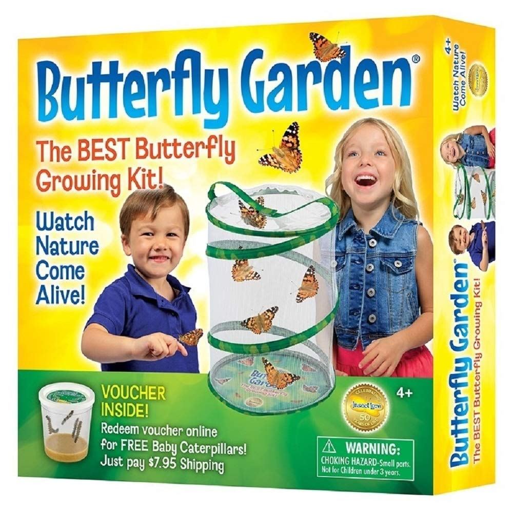 Insect Lore Butterfly Growing Kit - With Voucher to Redeem Caterpillars Later by Insect Lore