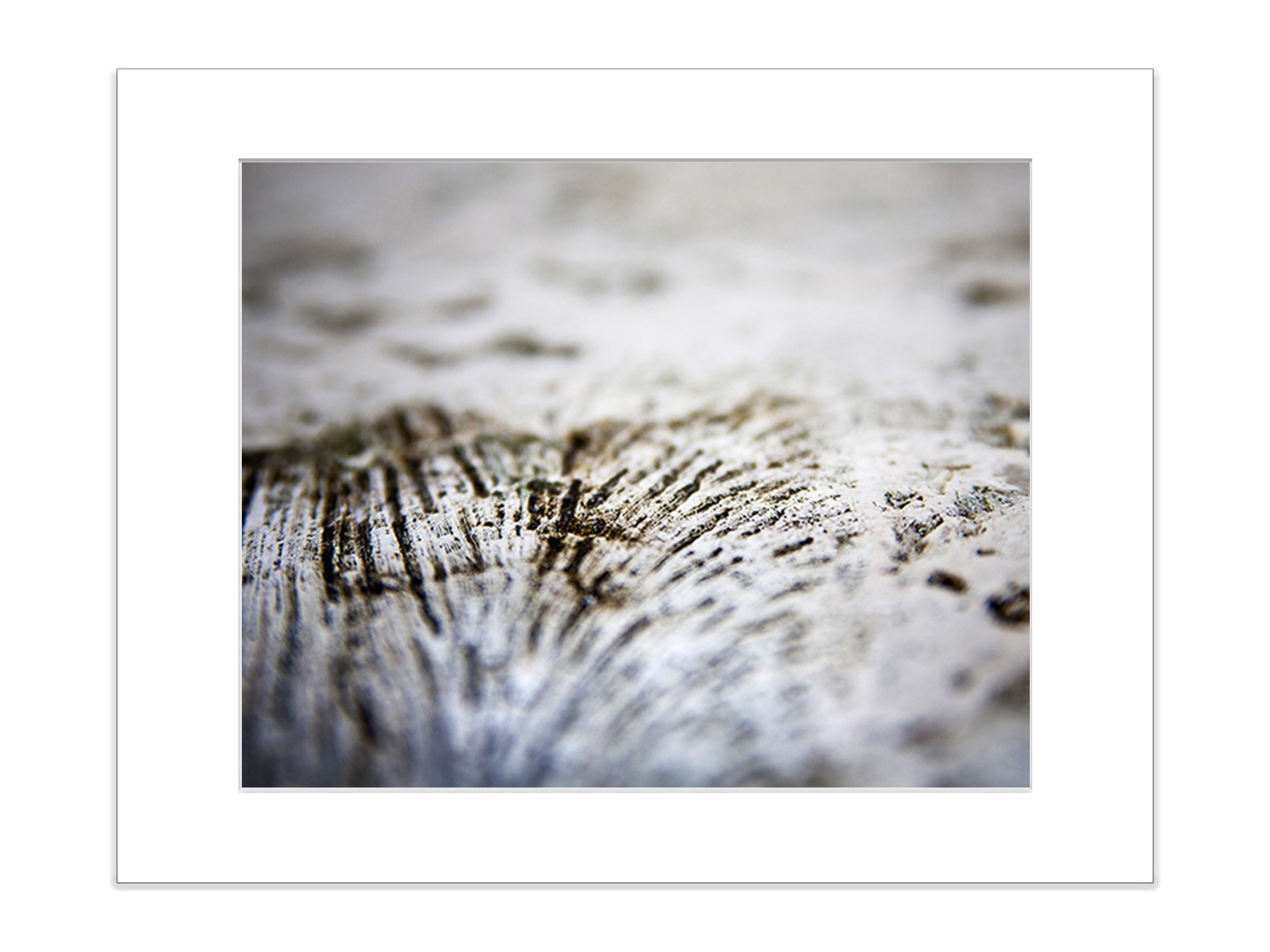 Coral Beach Photography 5x7 Inch Matted Photo Art Print Abstract Marine Life