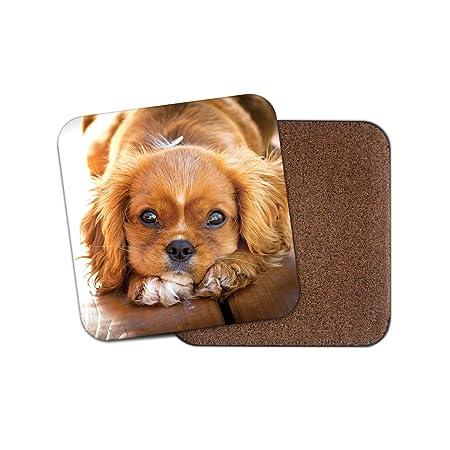 Regalo Cavalier King Charles Spaniel.Cavalier King Charles Spaniel Posavasos Cachorro Perro