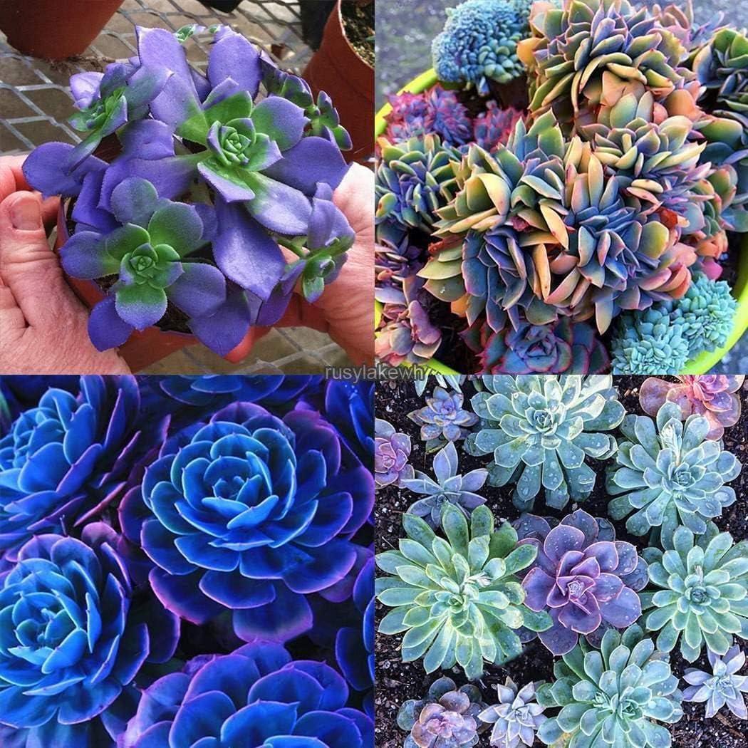 Portal Cool Type11: Semillas Huerta Plantas Blooms Pimienta ...