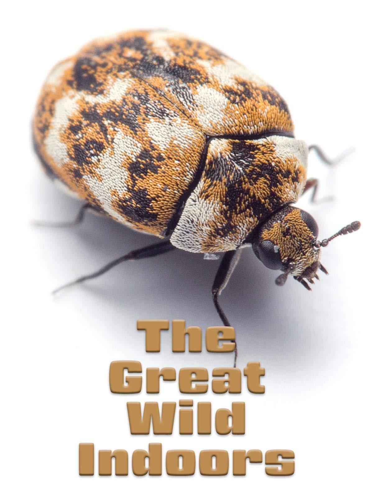 The Great Wild Indoors