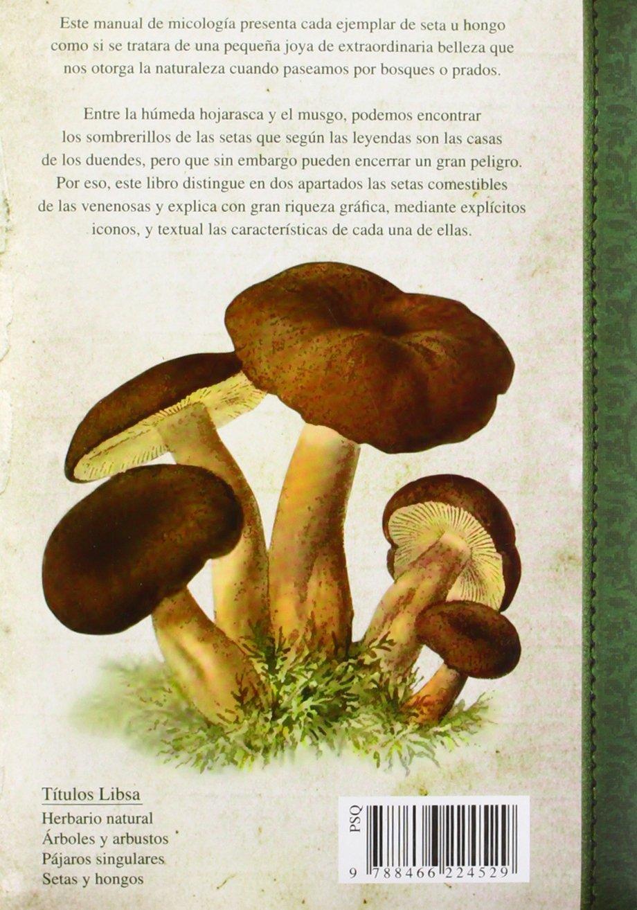 que es el hongo y sus caracteristicas