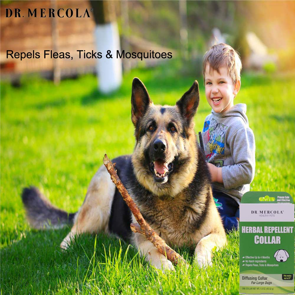 Dr. Mercola Herbal Repellent Collar For Large Dogs with Natural Active Ingredients, Long-lasting Flea Prevention - Odorless, Safe and Waterproof Flea Collars Effective Up To 4 Months, Necks up to 27'' by Dr. Mercola (Image #4)