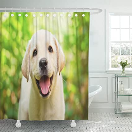 TOMPOP Shower Curtain Yellow Dog Labrador Retriever Puppy In The Yard  Shallow Dof Happy Face Waterproof