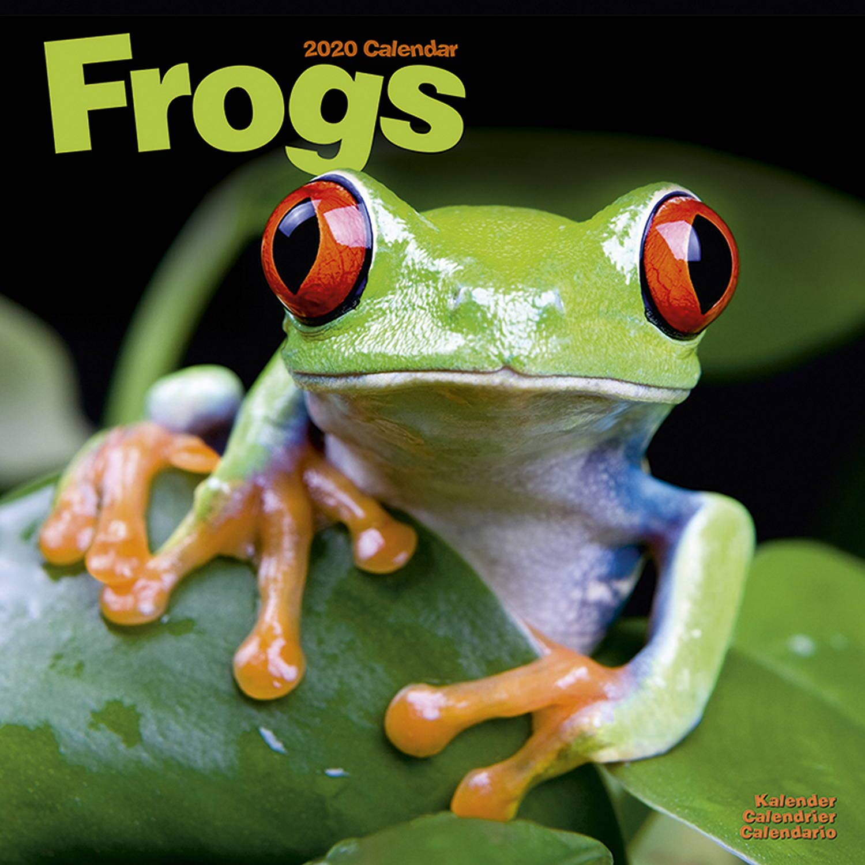 Calendrier Om 2020.Frog Calendar Cute Animal Calendar Calendars 2019 2020