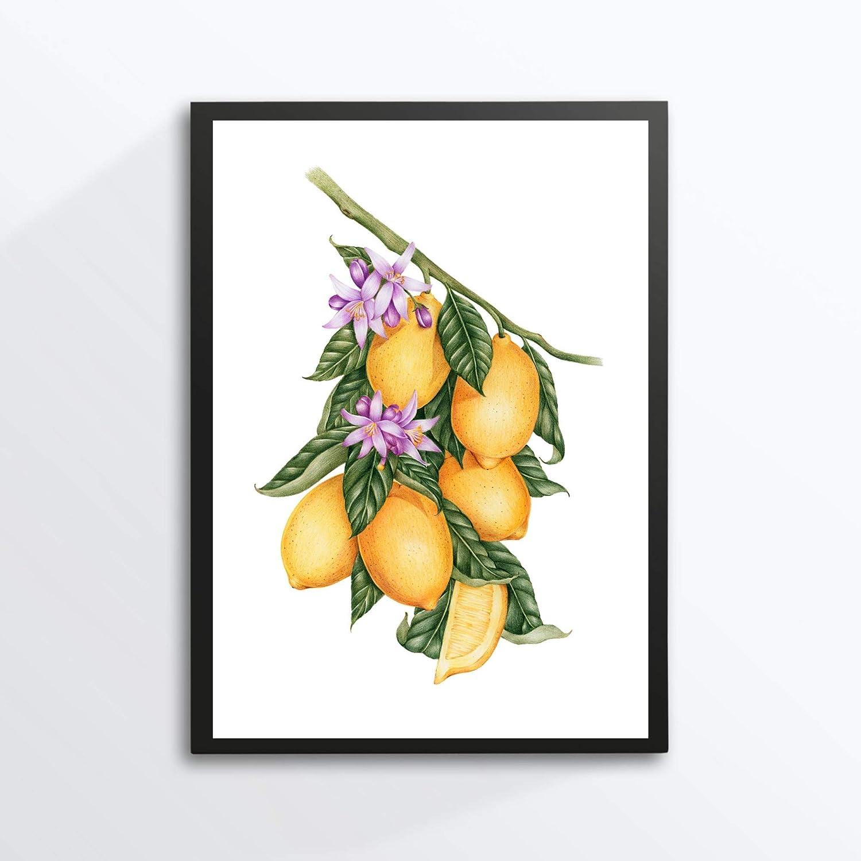 Din A4 Kunstdruck ungerahmt Zitrone Limone Obst Frucht Fr/üchte Esszimmer K/üche Druck Poster Bild