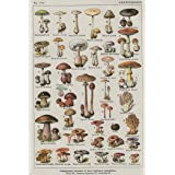 Uneedyt Vintage French Mushroom Chart Poster Collectors Exotic Specialty 24X36