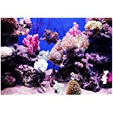 Fdit Fondo Acuario HD Ocean Fondo Marino Coral Wallpaper 3D Effect Adhesivo Mundo Submarino Fondo decoración