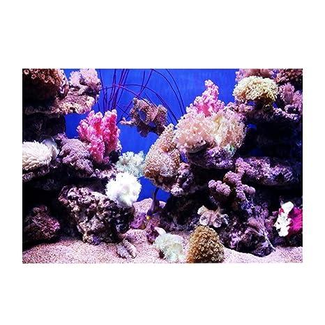Naroote Fondo para acuarios, Efecto 3D Adhesivo Coral Seaworld ...