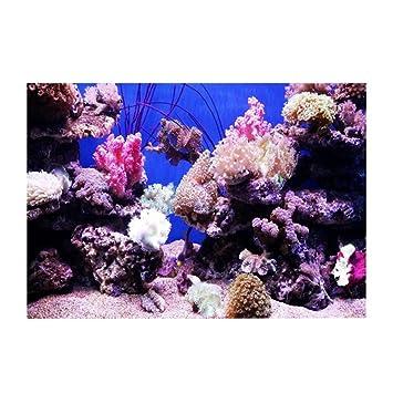 Fdit Fondo Acuario HD Ocean Fondo Marino Coral Wallpaper 3D Effect Adhesivo Mundo Submarino Fondo decoración para Acuario: Amazon.es: Hogar