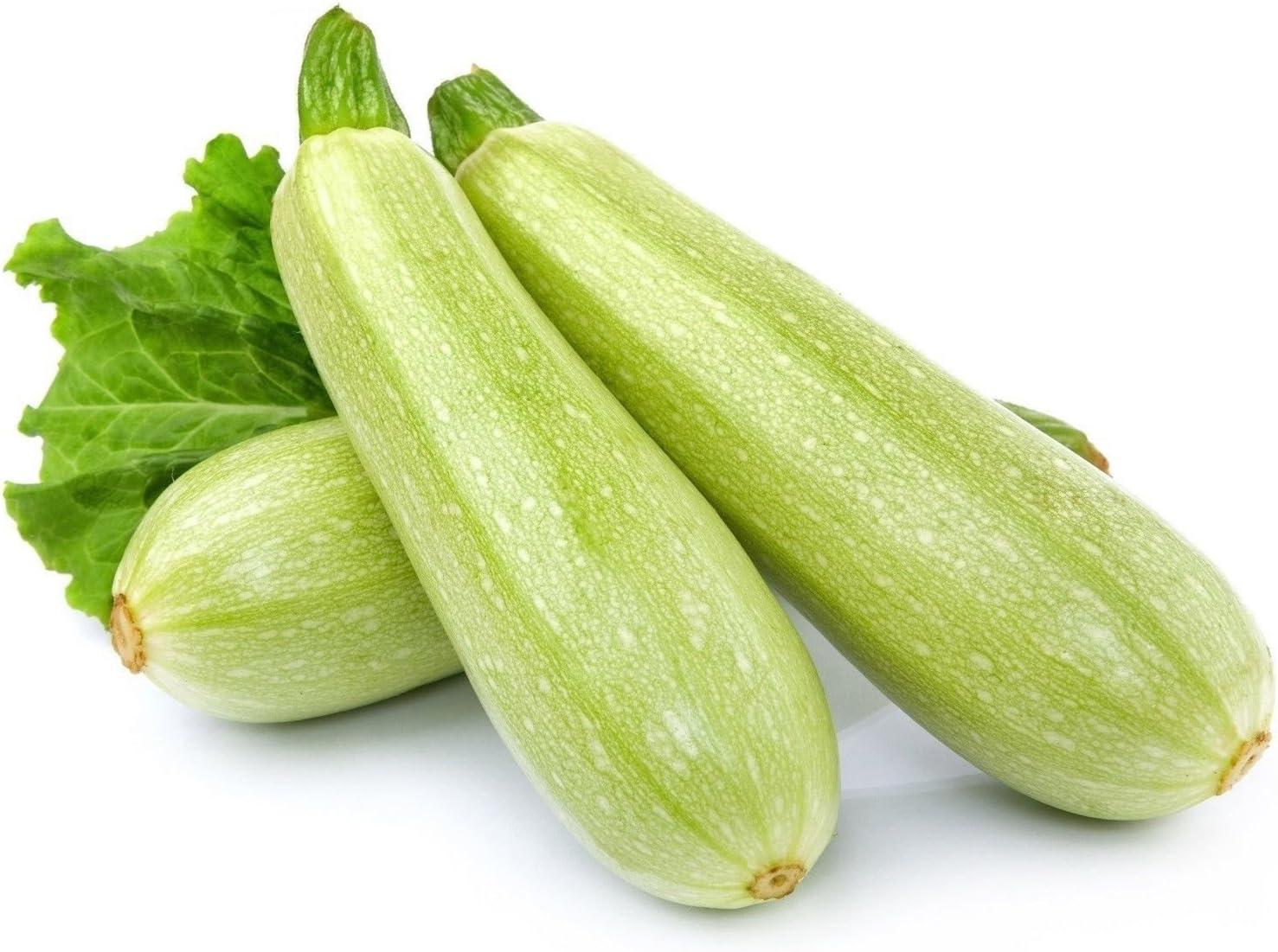 Squash Winter Spaghetti Non GMO Heirloom Garden Vegetable Seeds Sow No GMO\u00ae USA