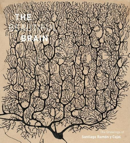 Beautiful Brain: The Drawings of Santiago Ramon y Cajal cover