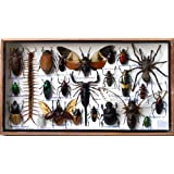 ThaiHonest Very Rare Real MIXS Insect Taxidermy Set in Boxes Display for Collectibles