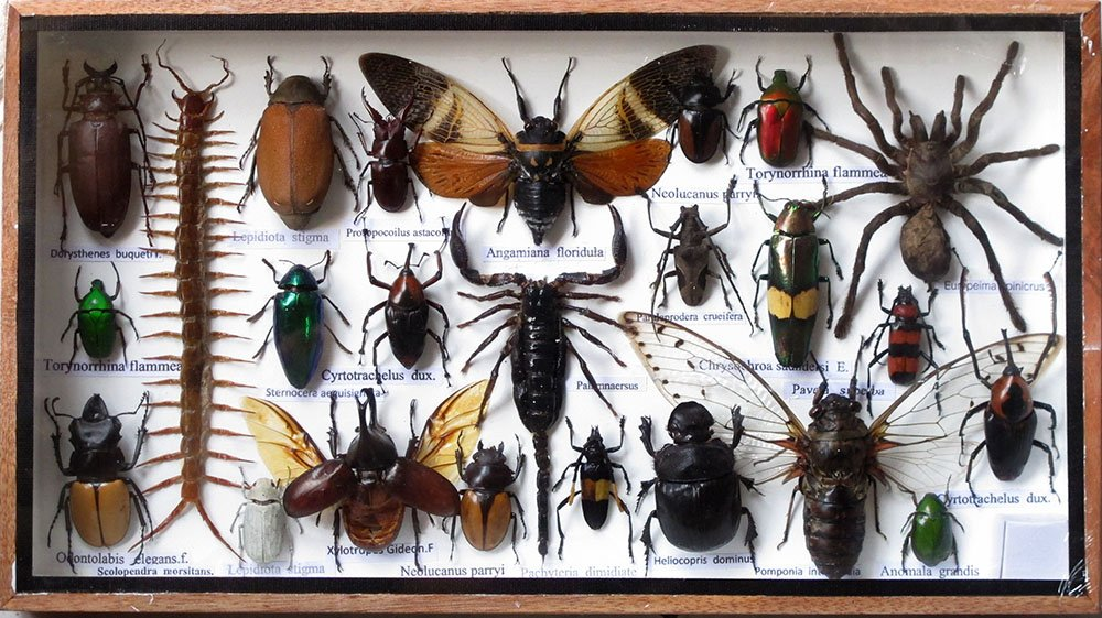 VERY RARE REAL MIXS INSECT TAXIDERMY SET IN BOXES DISPLAY FOR COLLECTIBLES