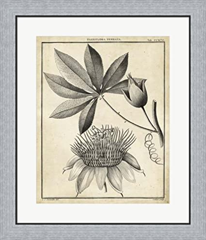 Amazon.com: Passiflora II by Charles Francois Sellier Framed Art ...