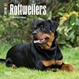 Rottweilers 2019 7 X 7 Inch Monthly Mini Wall Calendar Animals Dog