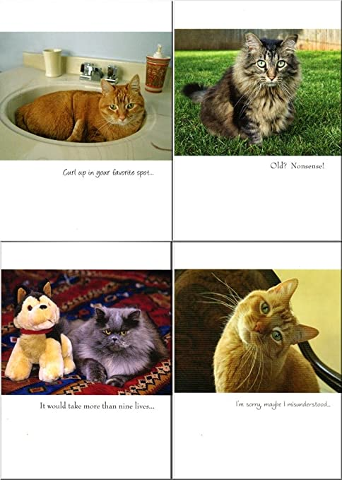 Amazon Funny Hysterical 35 Birthday Cards With Cat Themes That