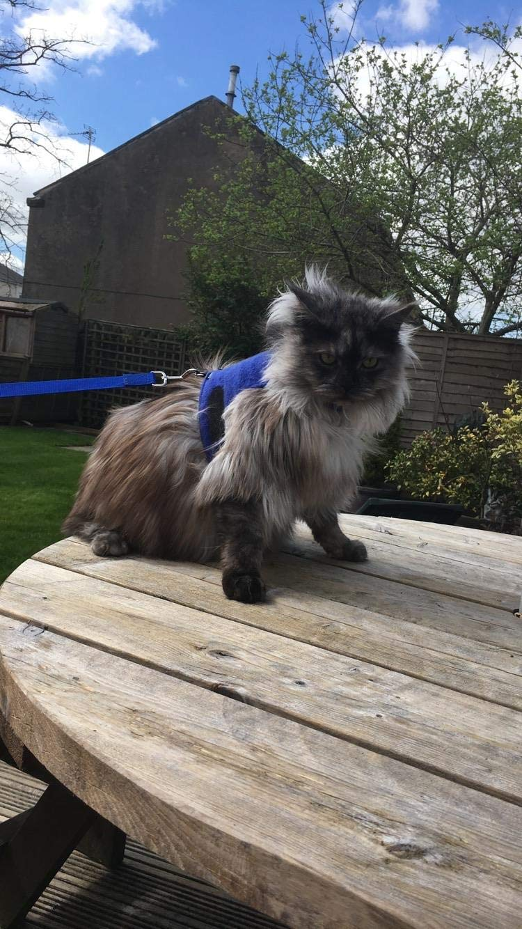 Mynwood Cat Jacket//Harness Blue Fleece Adult Cat