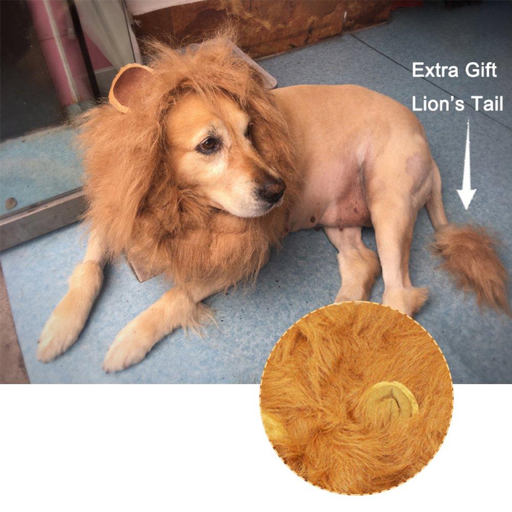 gaeruite Lion Crin para Perro Mascota, Perro Disfraz Lion Crin Peluca, Funny Dog Disfraz Lion Pelucas Pelo Notebook con Cola, para Navidad, Halloween Ropa ...