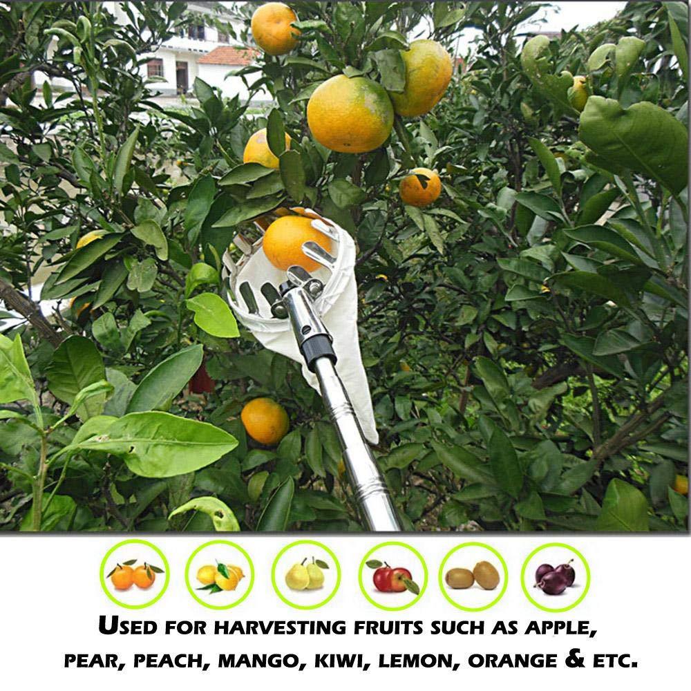 Cueilleurs de Pommes Cueilleur de Fruits Cueilleurs de Fruits avec Capuchons Protecteurs /Ø 140 mm CUEYU Cueilleurs de Fruits Cueille-Fruits sans Manche T/élescopique en M/étal
