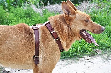 Moonpet - Arnés de piel para perro – no tire ajustable, arnés de ...