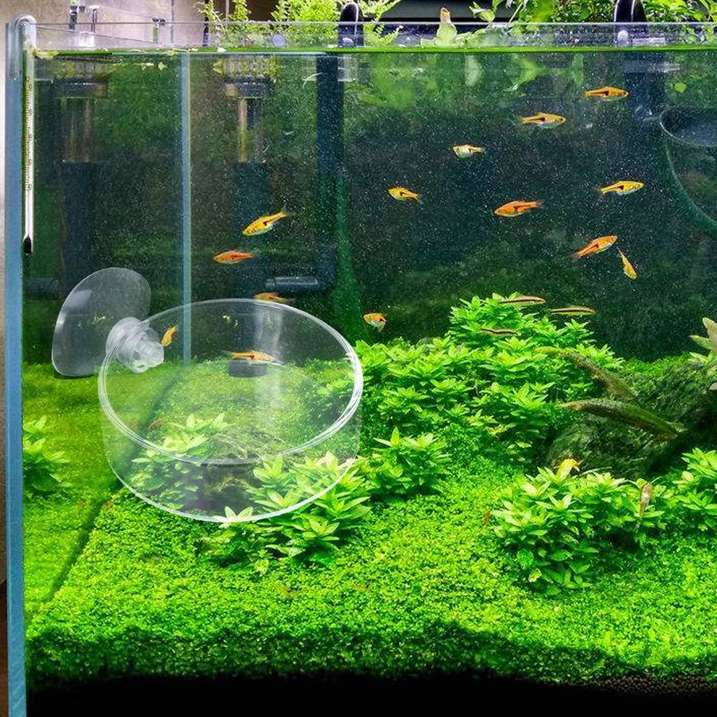 Tandou - Cuenco para Acuario con Forma de camarón de Cristal, Plato Transparente: Amazon.es: Productos para mascotas