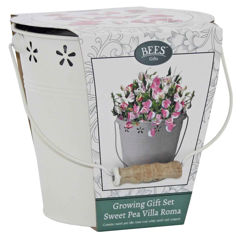 BEES Blumensamen Pflanztopf - Sweet Pea Villa Roma Anzuchtset