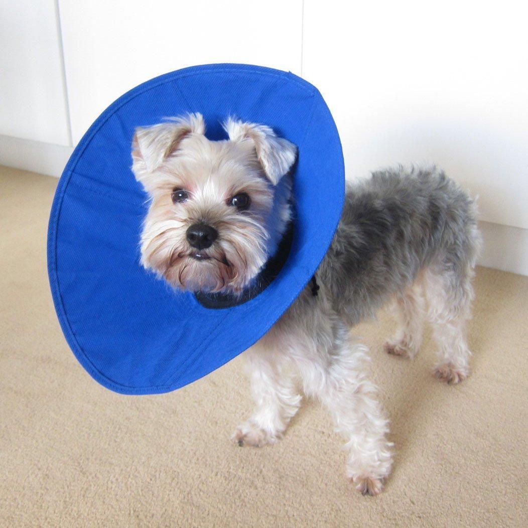 soft dog cones