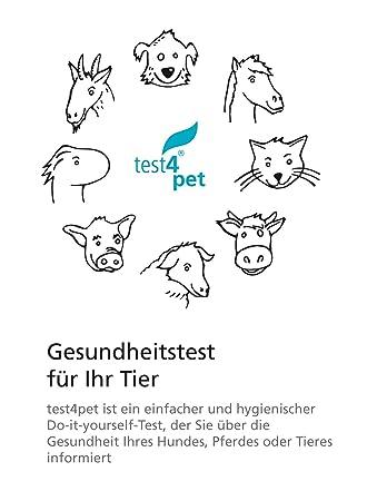 Blut Im Urin Hund - Tierische Tapete