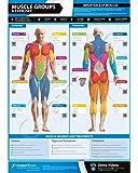 Affiche laminée Groupes musculaires et exercices A3 Vidéo d'instruction incluse [En anglais, smartphone uniquement]