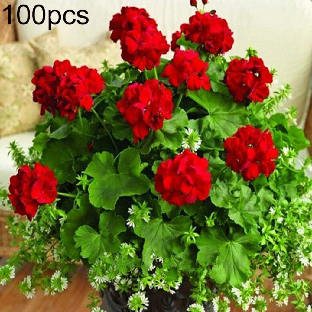 Uticon Las Semillas 100pcs La Flor Del Geranio Pelargonium Jard¨ªN Balc¨®N Bonsai Planta De Tiesto Decoraci¨®N - Semillas De Color Rojo Geranio