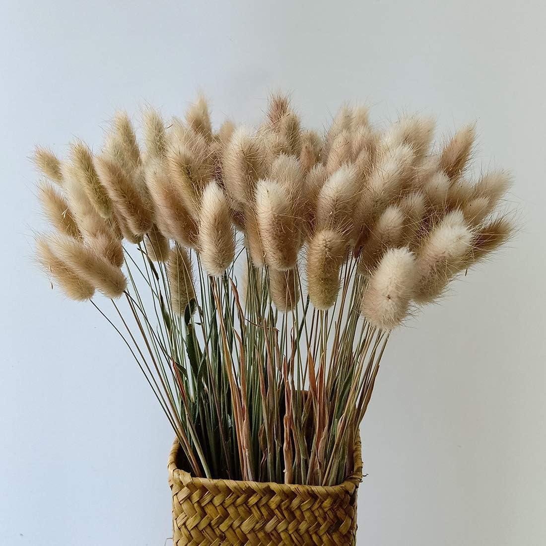 Dried Bunny Tail Grass Lagurus Grass Dried Flower Bouquet Decorative Feathers