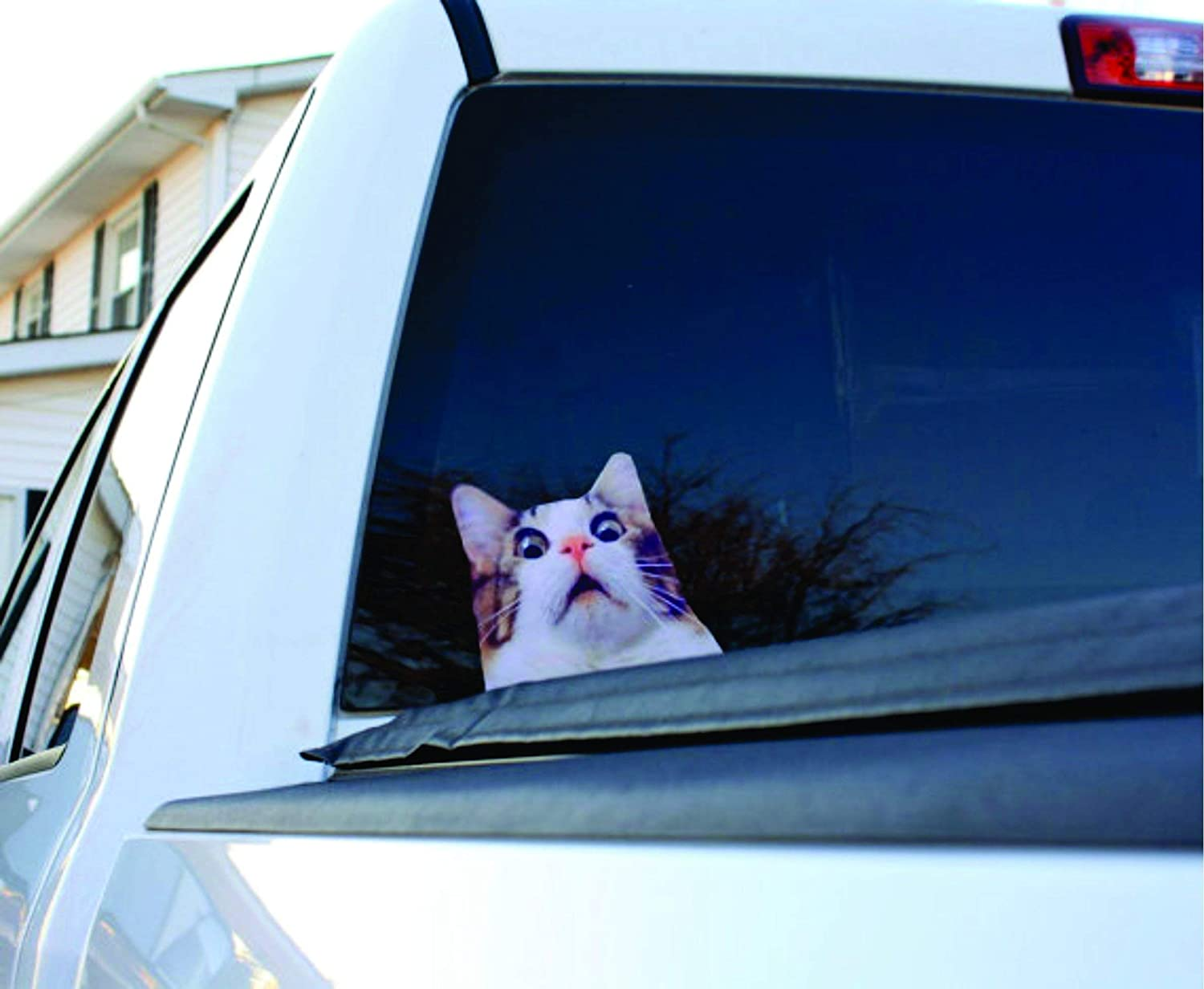 Cat Sticker, Cat Decal, Funny Cat Decal, Scaredy Cat sticker, Cat Decal