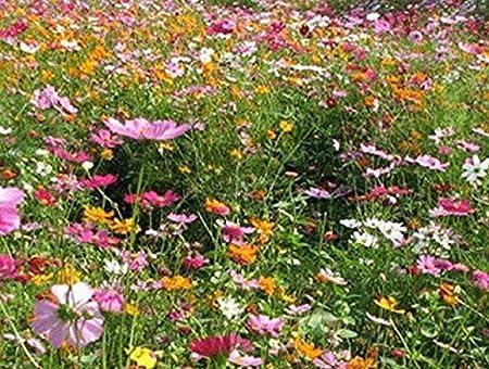 Original Package 200 Short Height Wildflowers Mix Seeds Flower Garden Plant K004