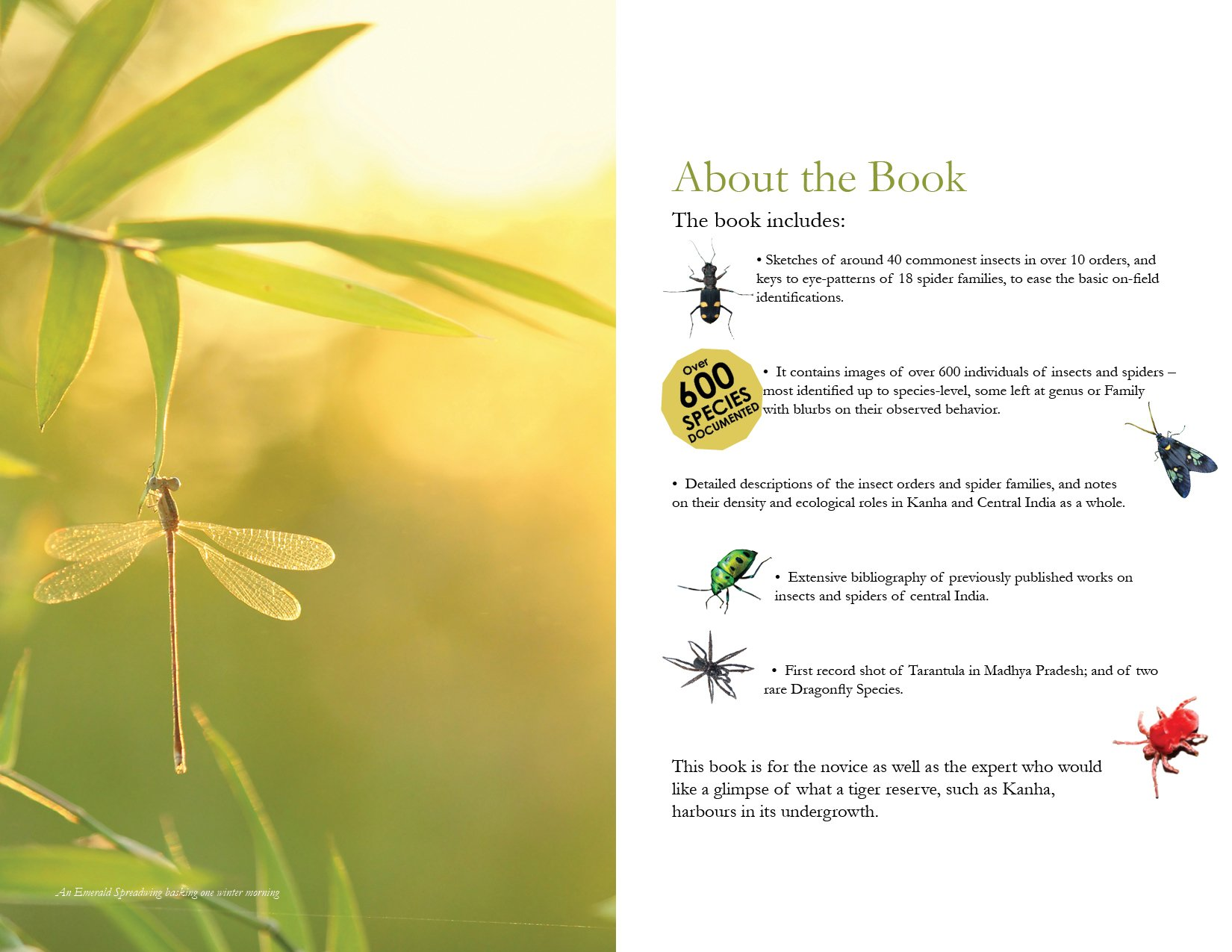 buy a field guide to insects u0026 spiders of kanha tiger reserve book