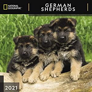 National Geographic German Shepherds 2021 Wall Calendar